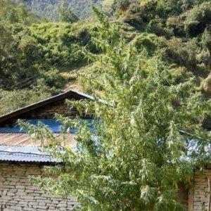 Nepal Annapurna, Hergestellt vo - cannapot   ello