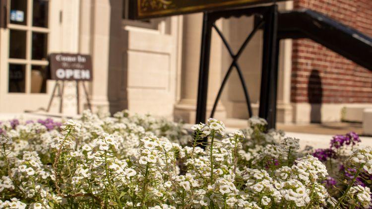 Beautiful flower bed front art  - anibalv | ello