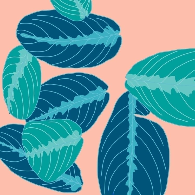 Maranta foliage - prayerplant, houseplant - terastar   ello