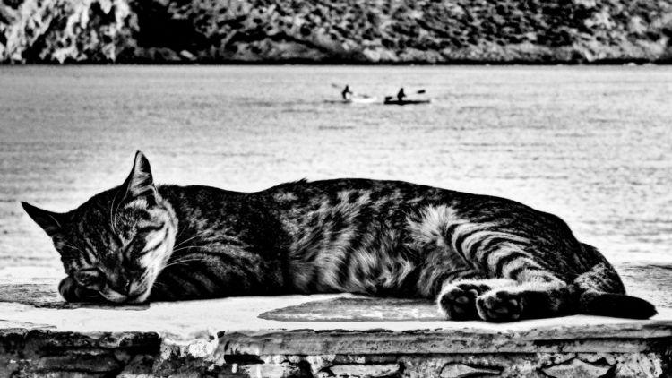 Greek Cat Silly humans, splashi - skoptaphotograghy | ello