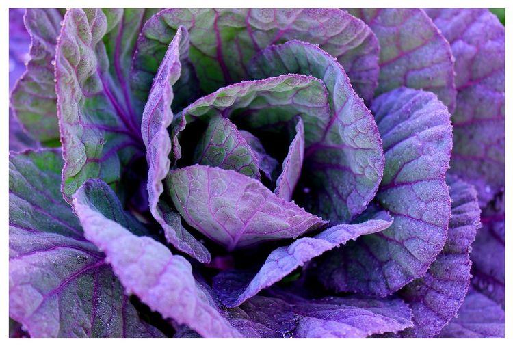 'Purple Frost' prints Redbubble - 3lizabeth4nne | ello