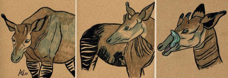 Okapi sketches. 2020 - aotar-le-quaint | ello