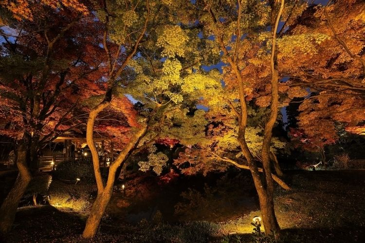 Late autumn Kyoto JAPAN - miki_abe | ello