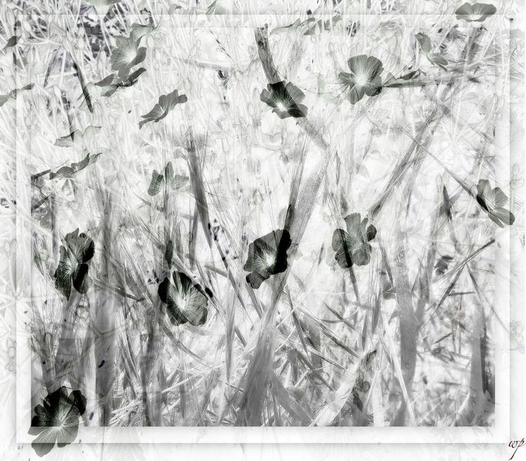 fields summer / multiple exposu - voiceofsf | ello