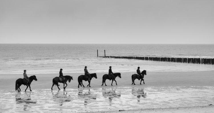 horses, ride, northsea, beach - georgie_pauwels | ello