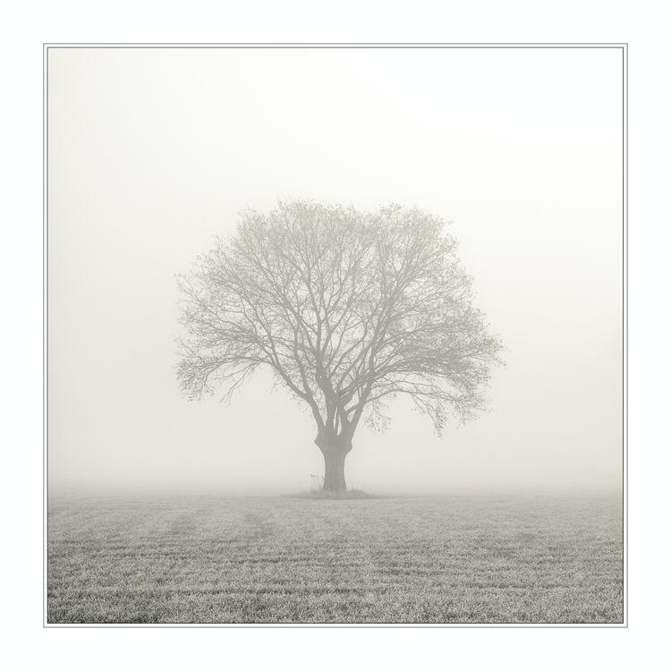 bare essence love winter strips - annemio   ello