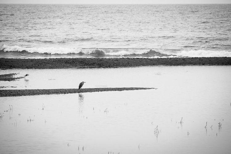 morning, Banyuls sur Mer, Franc - yannkerveno   ello