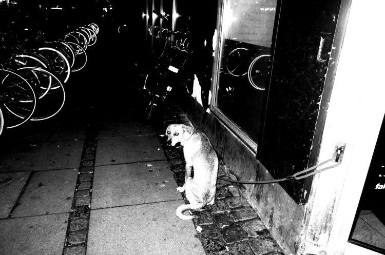 Dog Copenhagen - street, photography - petersteinmetz | ello