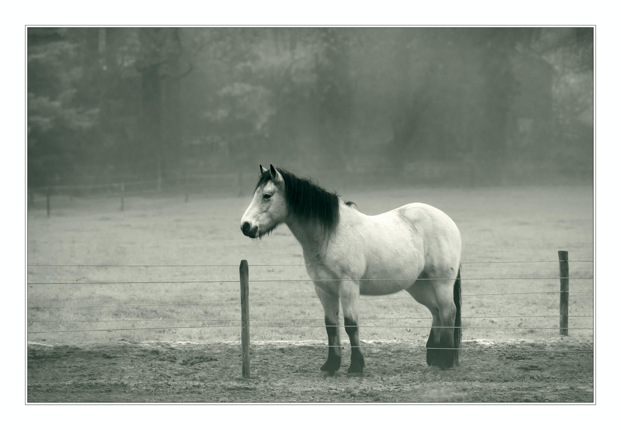 horse cold foggy winter morning - annemio | ello