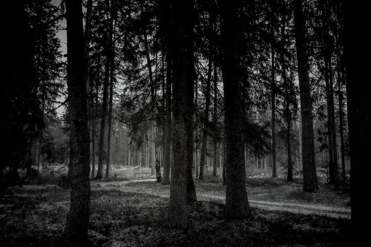 lithuania, lietuva, природа, landscape - beheroght   ello