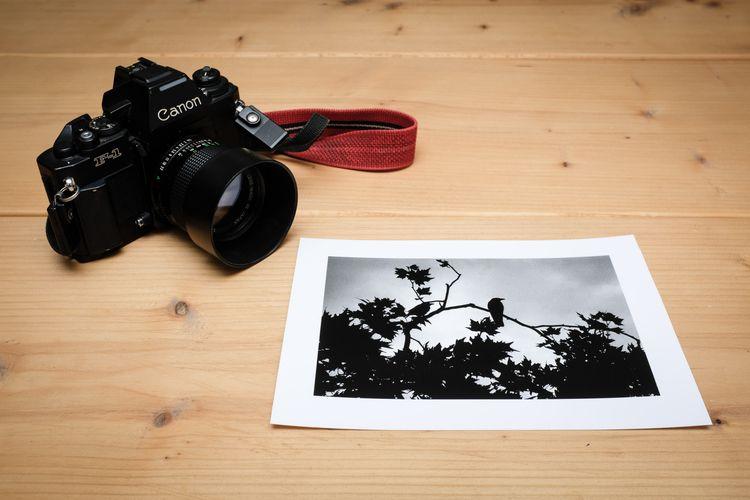 Crow Classic Photographic Print - pluggedmind   ello