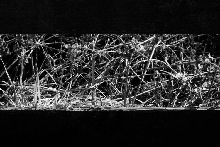 Kino fence lens - photography, blackandwhite - marcushammerschmitt   ello