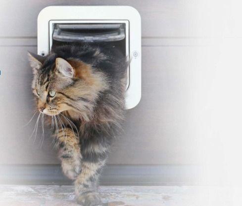 fact cats curious animals fluff - yourmasteruk | ello