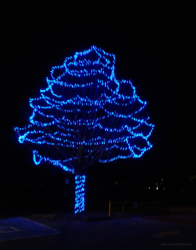 Happy holidays! Photo - FredaMans - fredasvoice | ello