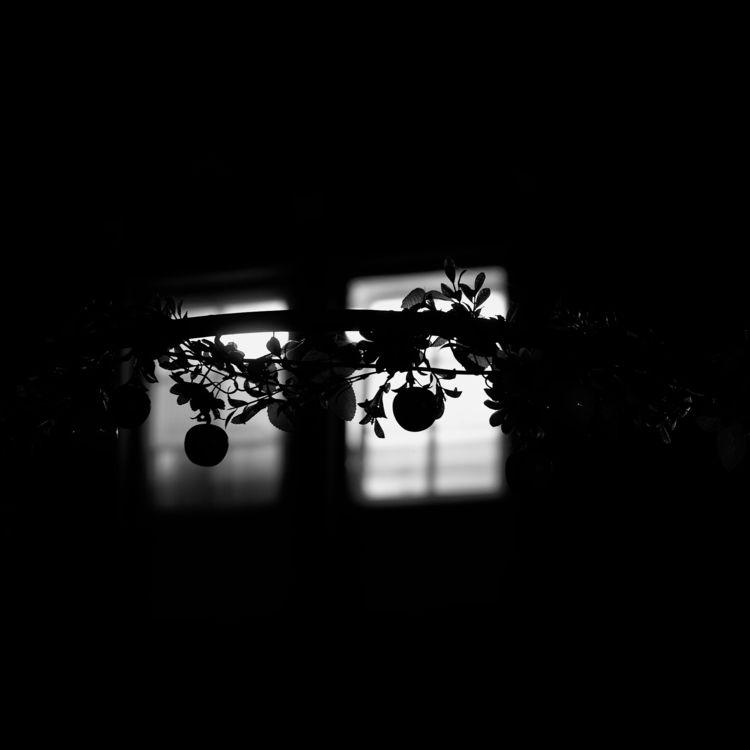 Homunc - photography, apples, fake - marcushammerschmitt | ello