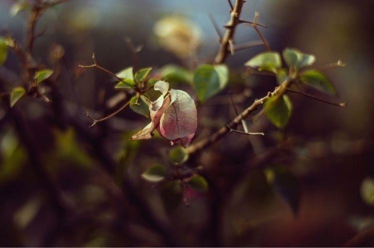 forlorn flower, companionless w - moon82   ello