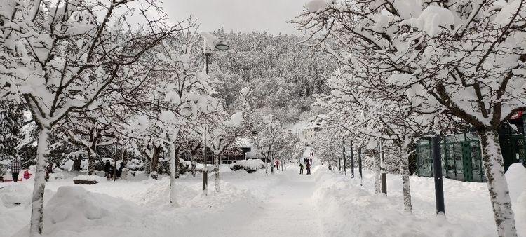 [2020/12/30]. Mont - snow - petit_louis | ello
