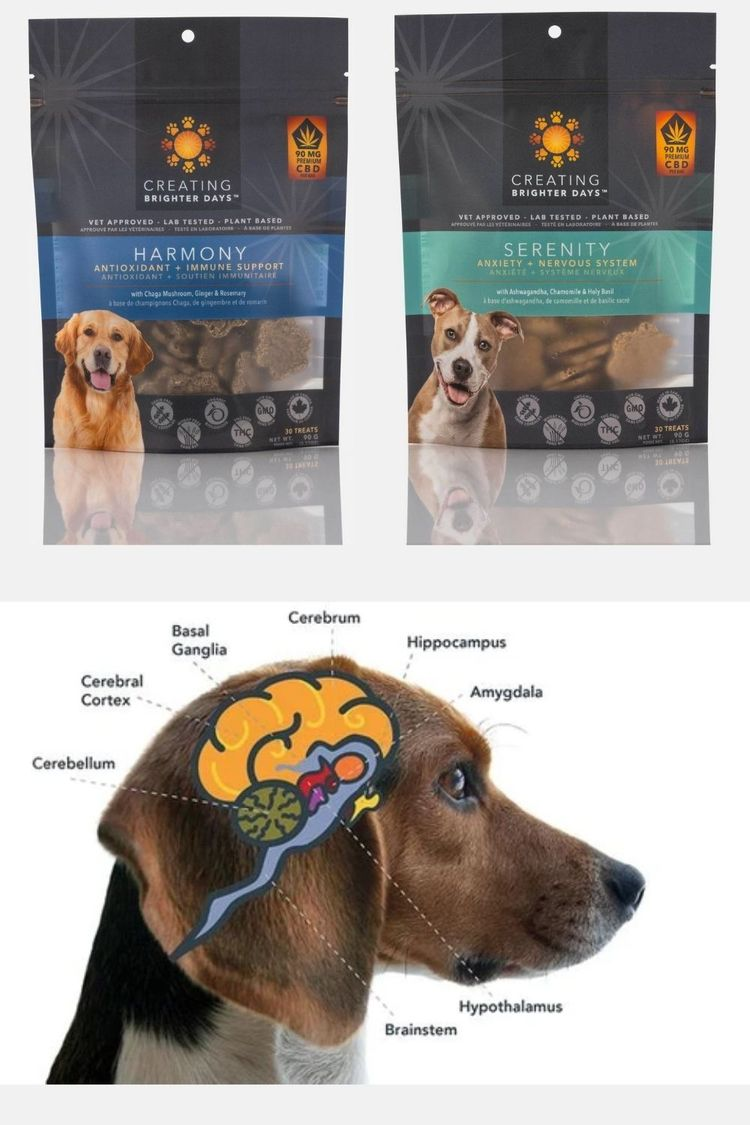 CBD Products Dogs Canada produc - chilliwackcbd | ello