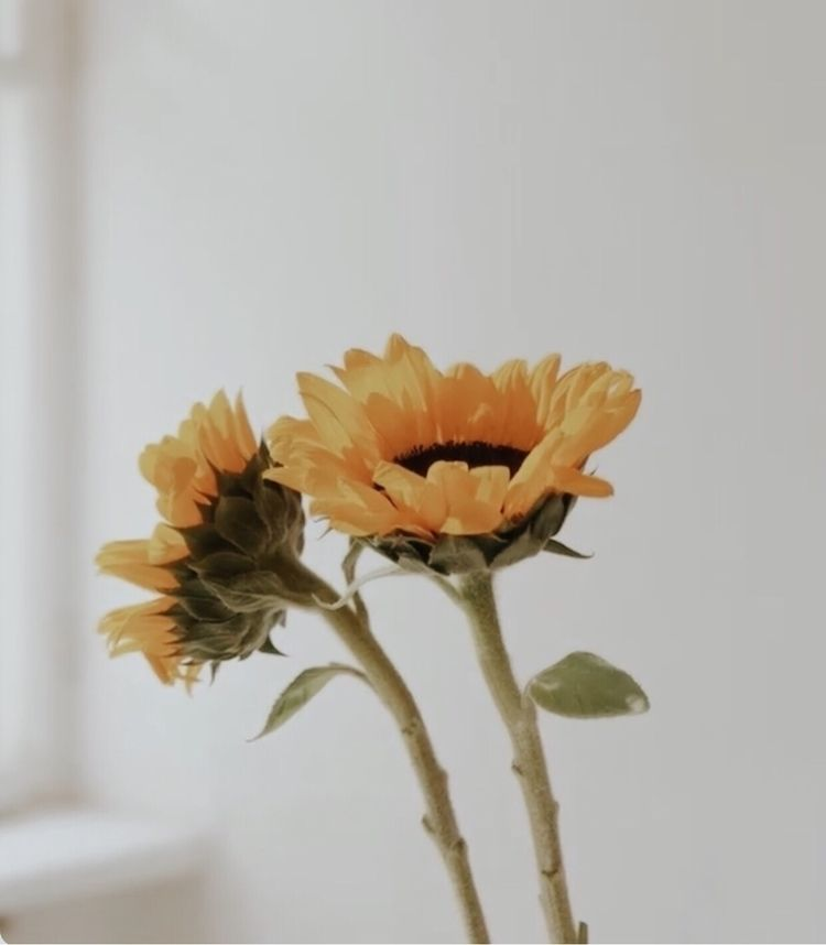 blooming sunflower vase - flower - onurollstyle | ello