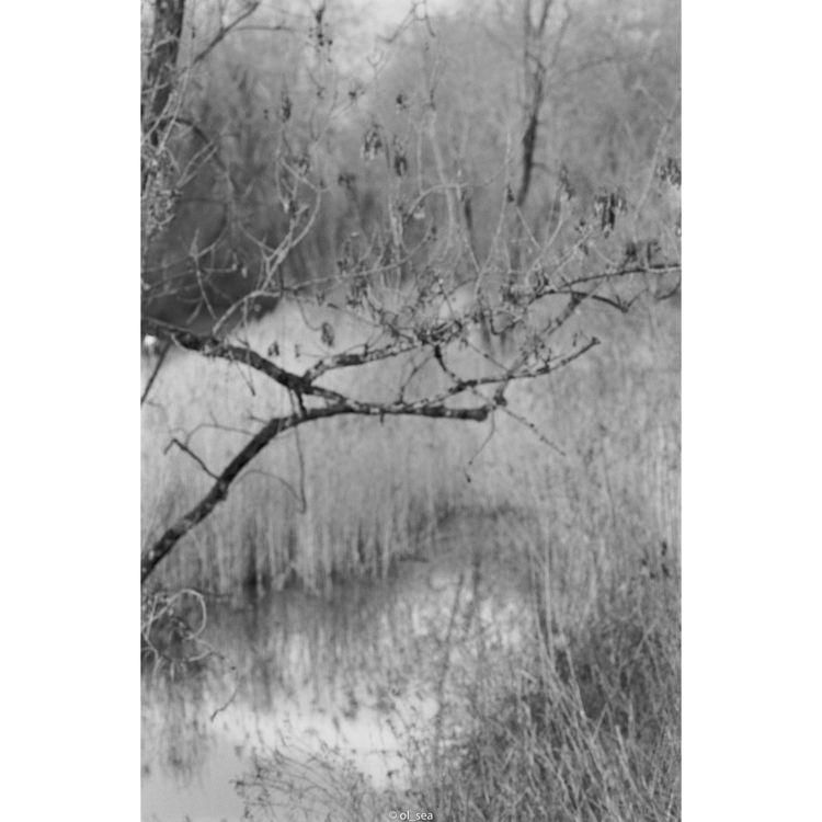 film ilford delta100 - monochrome - ol_sea | ello