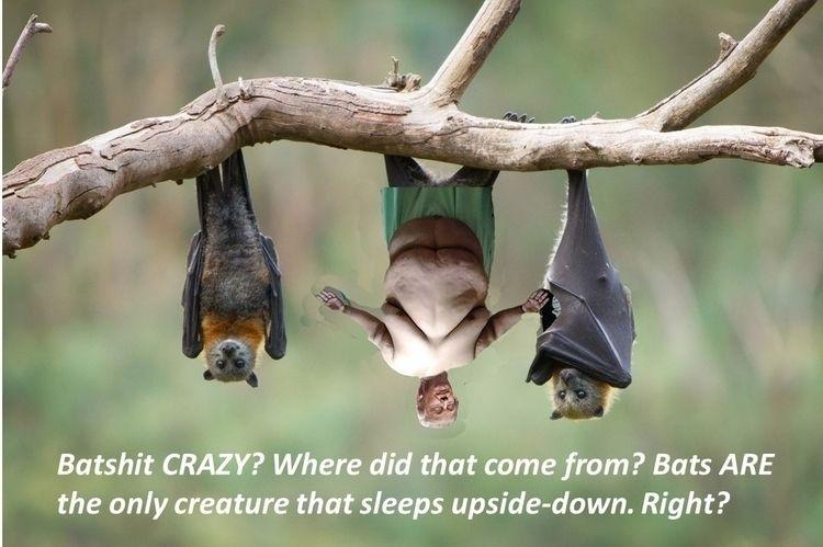 phrase Batshit Crazy originate - drtcsaxedd | ello