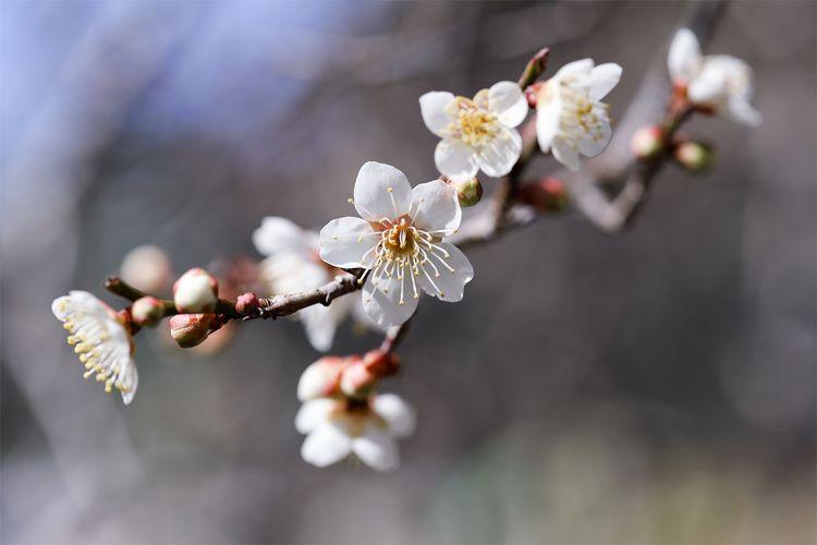 tsukigase Spring 2021 - miki_abe | ello
