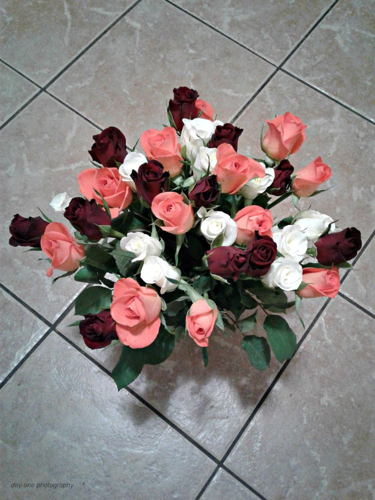 Roses hubby. Photo - FredaMans - fredasvoice | ello
