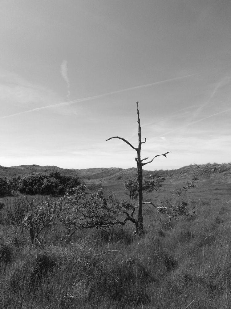 tree, nature, dune, netherlands - brypalla | ello