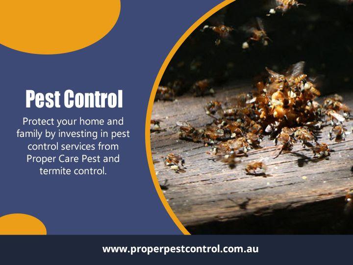 Pest Control Upper Coomera Find - properpestcontrol | ello