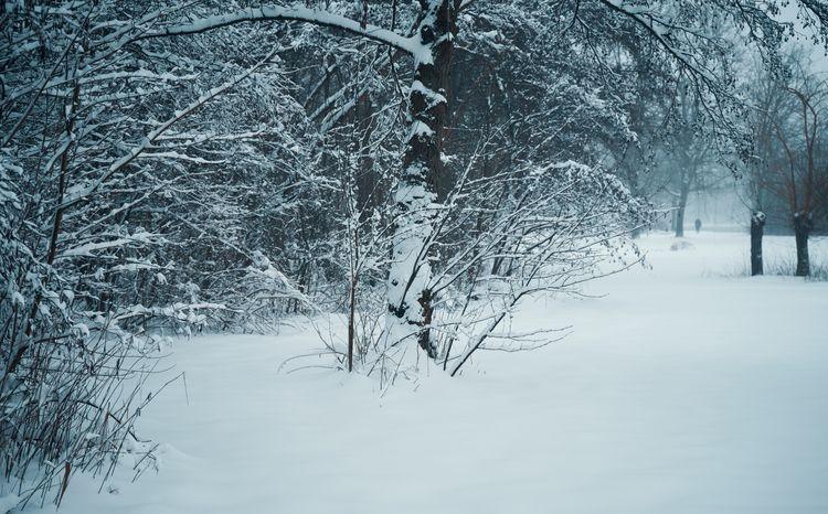 Snow covered tree blowing snow - klausheeskens   ello