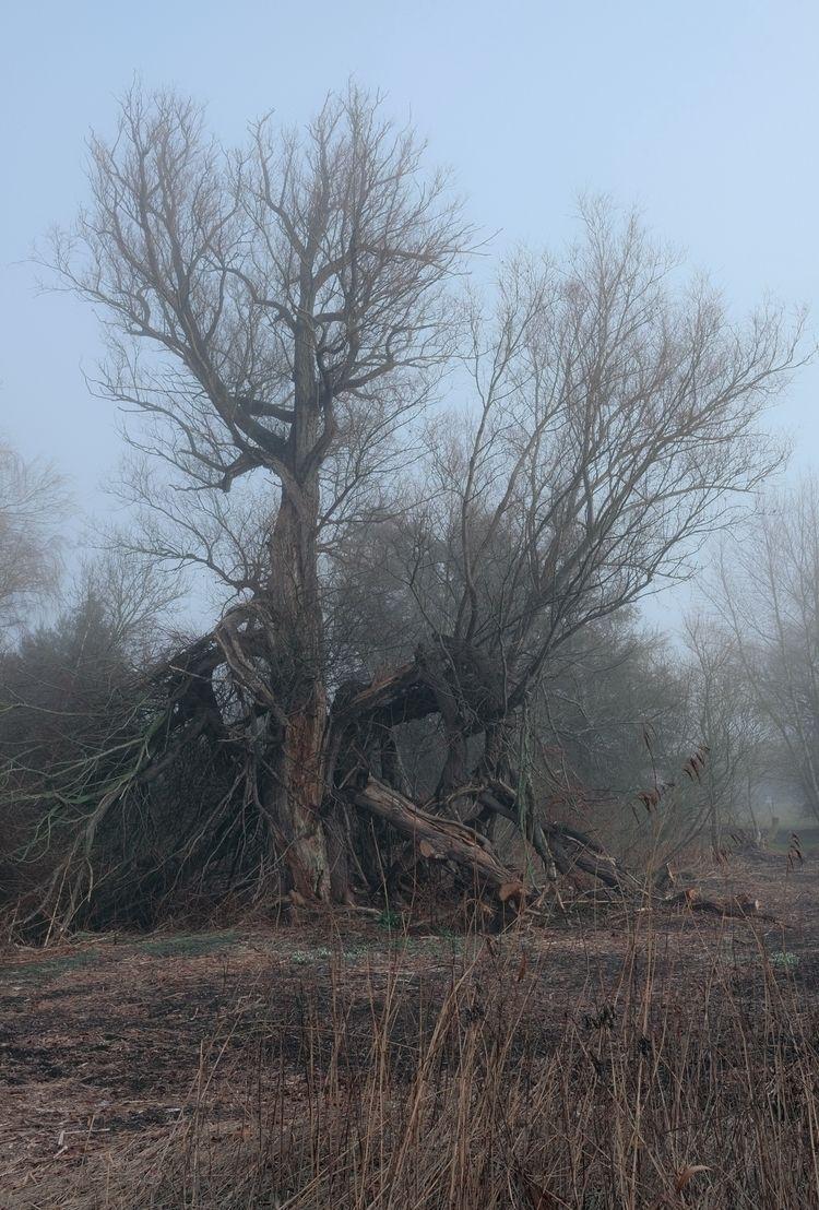 Trees Ents? Møn, Zealand - kulturformidleren   ello