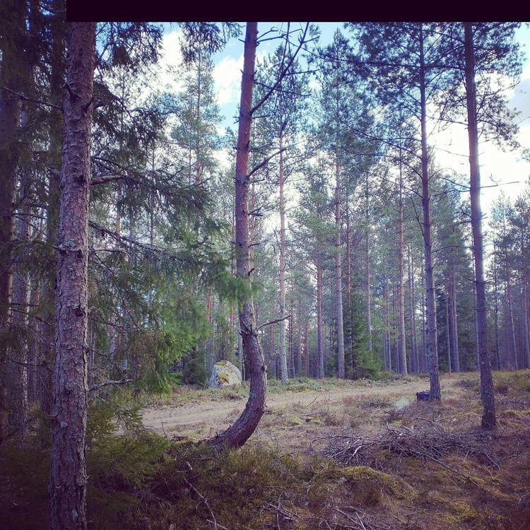 Kungens Dunge ~ Elmia Wood 1983 - mellyrn | ello