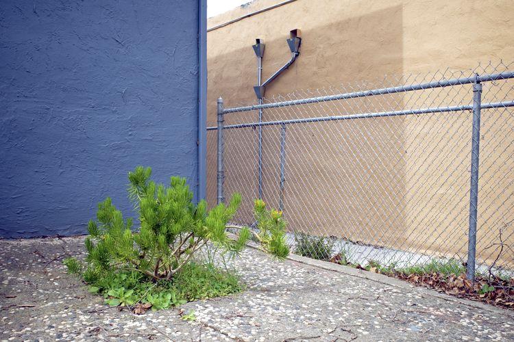 Berkeley, CA / March 14, 2021 - green - biosfear | ello