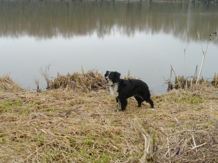 age (13 beautiful dog met. fall - thomasokeefe | ello