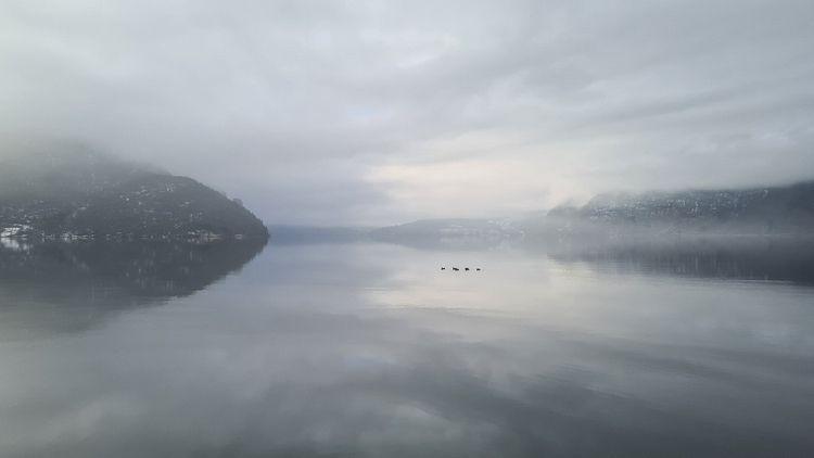 ducks distanse grey fjord - espengya   ello