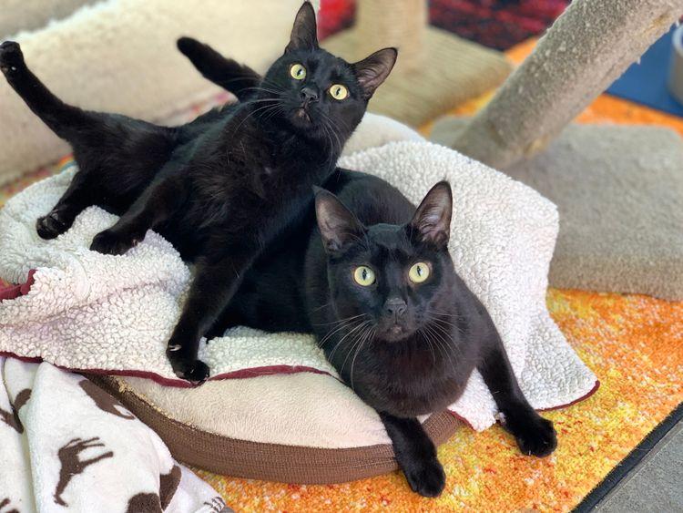 BLACK FRIDAY! wild crazy guys B - snapcats | ello