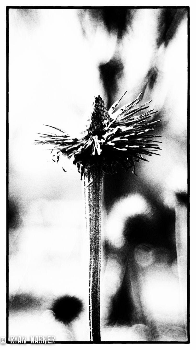 Title: Dead Flowers - Columbus  - ryanwarner_creative | ello