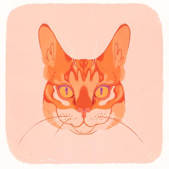 present roommate birthday! cat  - samanthamash   ello