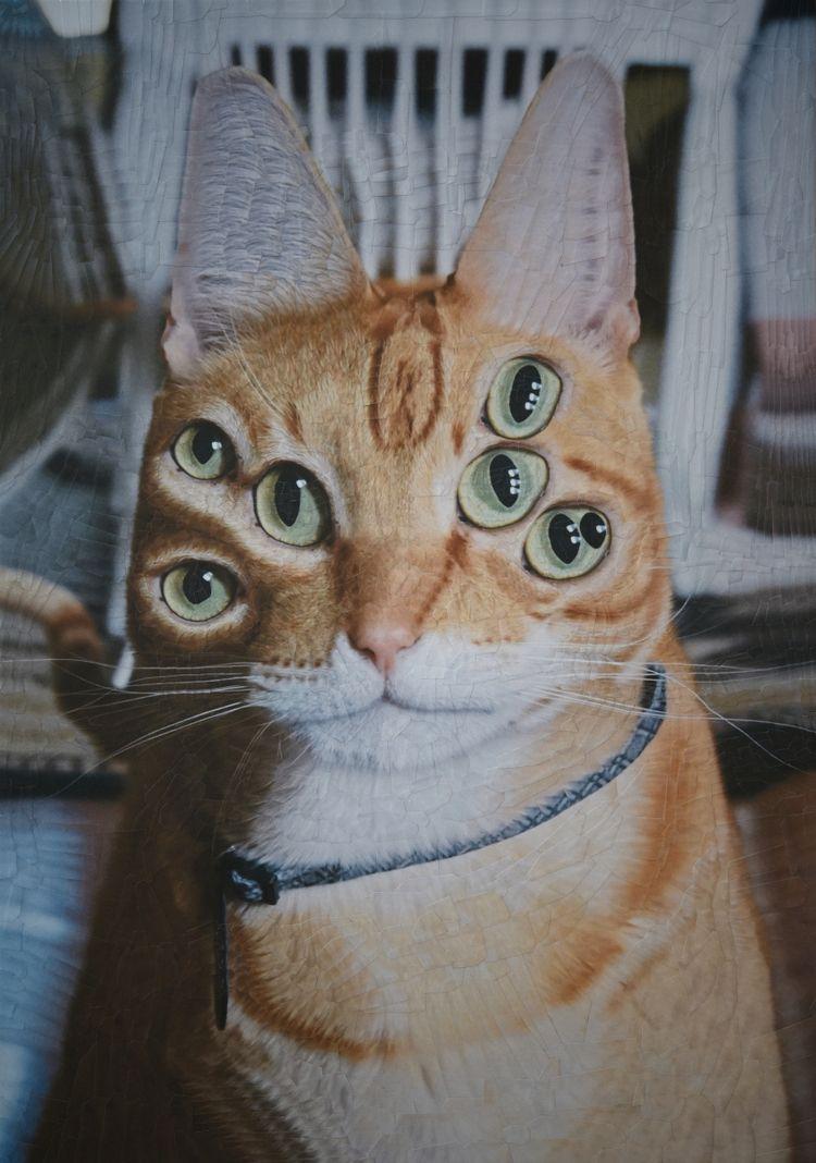 Jack, 11.5 16.5 inches - cats, charlie - loladupre   ello