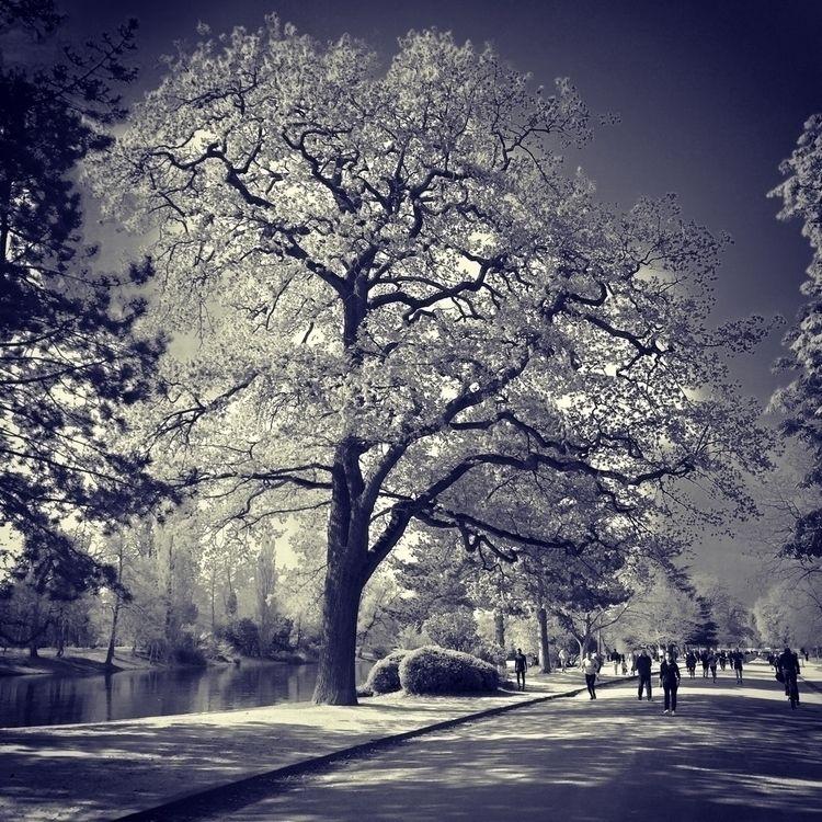 Les arbres du lac - 5, tree, trees - alexosinho | ello
