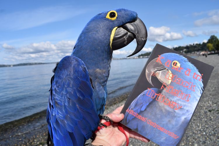 Hyacinth Macaw resident Princes - michaelostrogorsky | ello