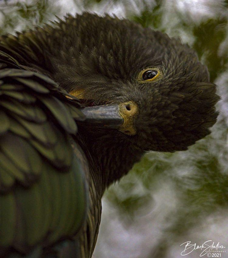 Zoos Wildlife Parks tend places - igallopfree | ello