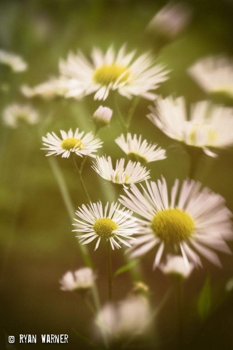 Title: Wildflowers - Manitoulin - ryanwarner_creative   ello