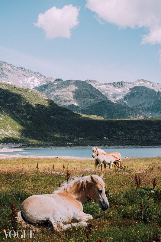 Wild Horses - Lands :copyright - acomalini   ello
