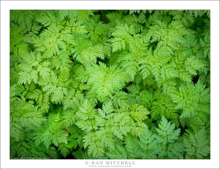 Spring Green. Copyright 2021 Da - gdanmitchell | ello