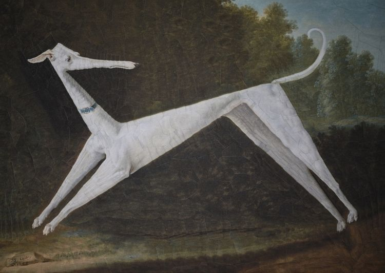 Darwin Oudry 11.6 8.2 inches - collage - loladupre | ello