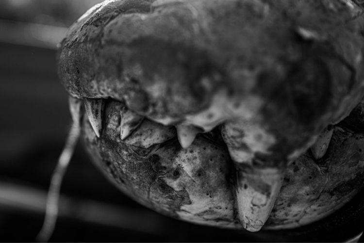 Monsters real - leica, africa, blackandwhite - ben-staley | ello