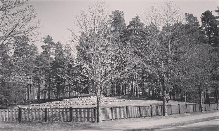 Kvarter 33 - Askgravplats Nykyr - skogskyrkogardar | ello