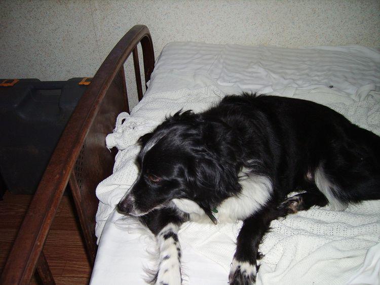 early wake hard dream hold unde - thomasokeefe | ello