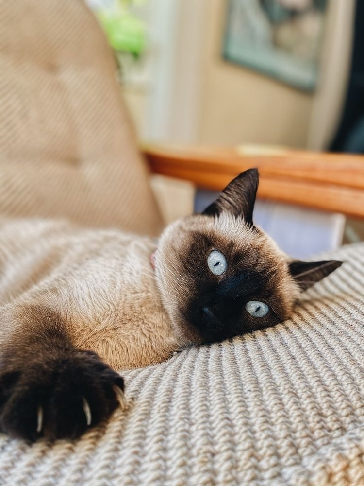 Cat couch - livingroom, housecat - minnley | ello